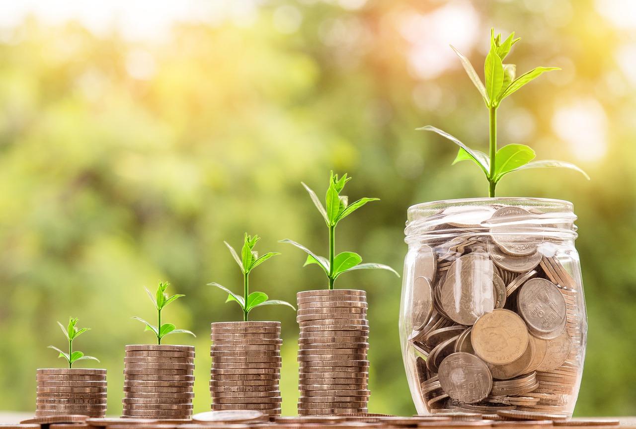 Sukcesy firm: Dino i Codewise oraz ich skryci właściciele